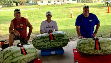 Photo of Old Washinton Farmer's Market to Host Official Watermelon Weigh Off