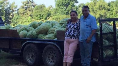 Photo of It's A Watermelon Life-Pt 3: V&C Farms
