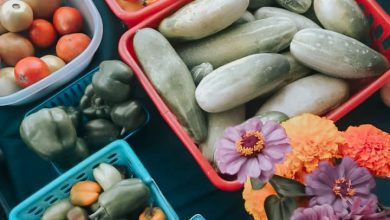 Photo of This Week's Hope Farmers Market