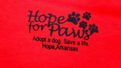Photo of Hope For PAWS – 'a small group of people that work for these dogs'