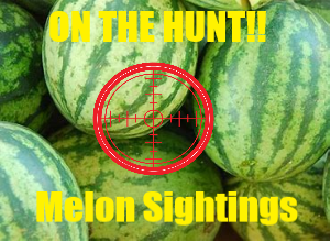 Photo of Join SWARK.Today In A Countdown To The Festival And Hunting Melons